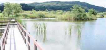 秋の一日、トンボとのどかな風景がいやしてくれる「ふるさとトンボ池」をゆるゆる気分で散策