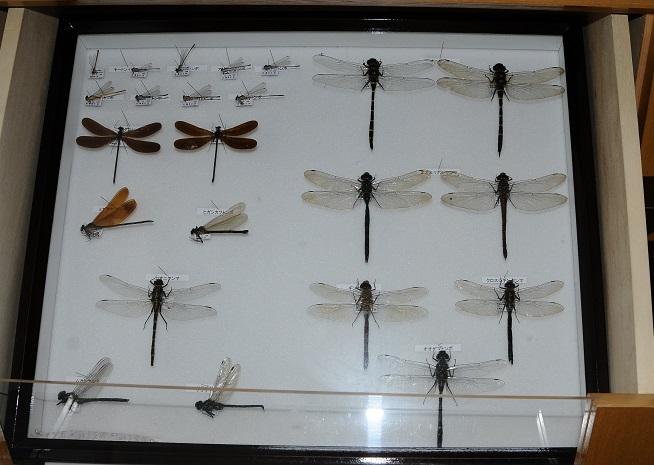 標本2メーン リサイズ
