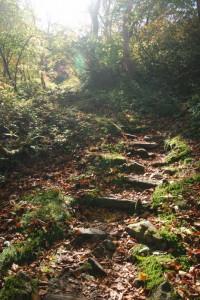 蓮華温泉の山道