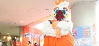 バスケシーズン到来!! プロバスケットボール・TKbjリーグ・新潟アルビレックスBBが4、5日にホームで開幕戦