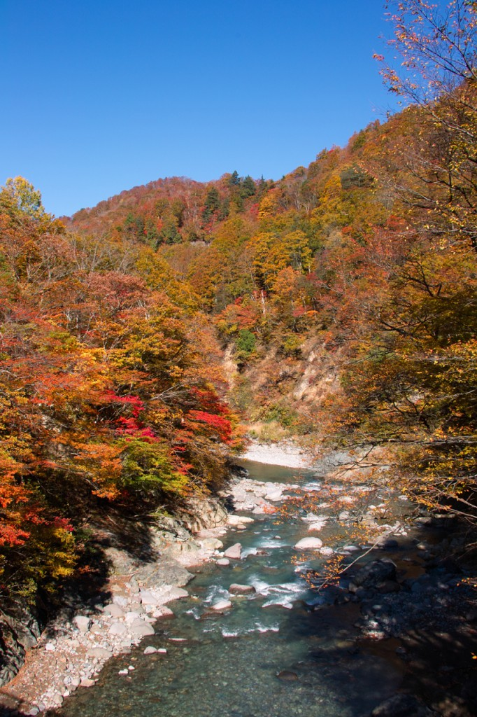 同じ場所から川を撮影。紅葉まっさかりですね!