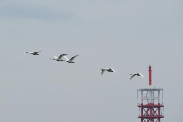 14bird_watching_toyanogata04