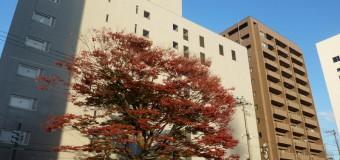 【ボタニカル】街なかで紅葉狩り 萬代橋の歴史にも関わりあり? 樹木マップシリーズ第2弾