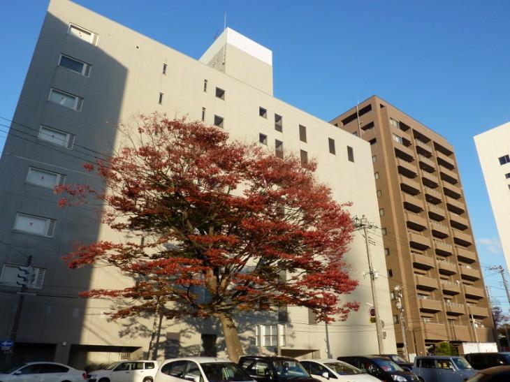 新潟市保存樹オークラ04
