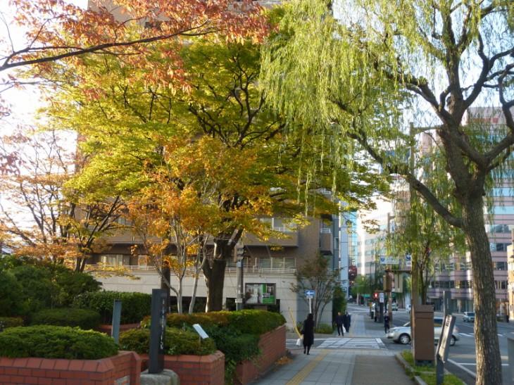 新潟市保存樹オークラ02