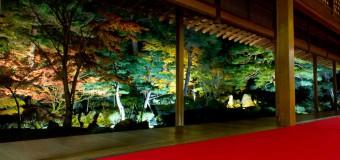 秋の夜長に感じる日本の美、北方文化博物館で「庭園ライトアップ」が開催中(~11/24)