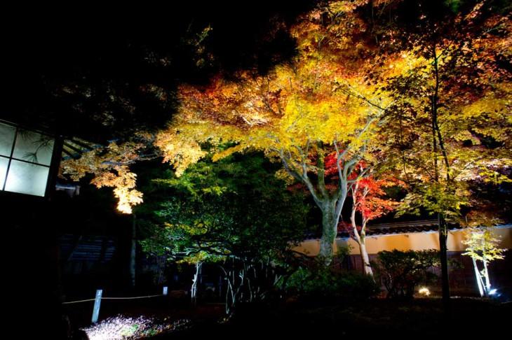 大玄関前の前庭です。キレイですね~。ここの紅葉が一番鮮やかに感じました。
