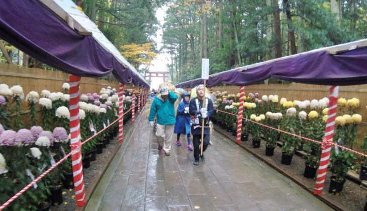 参道でも祝いの唄が披露されます。この日は「菊まつり」も行われていました。