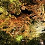 美しい紅葉が輝く夜、長岡のもみじ園でライトアップが始まってます