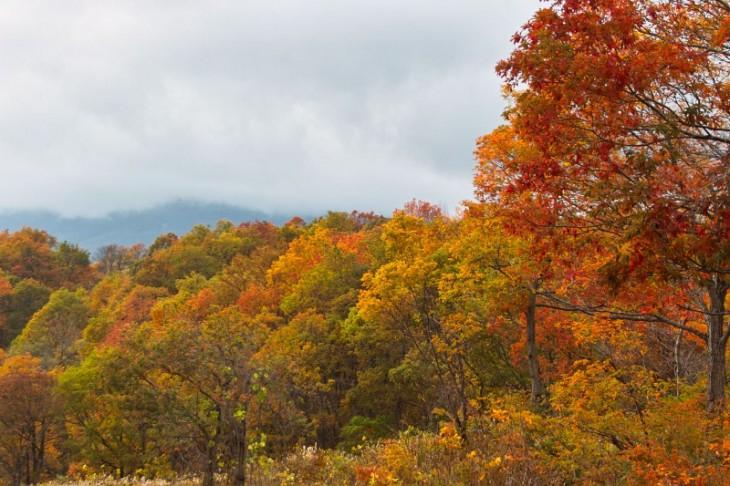 これは燕温泉と赤倉温泉の間くらいの紅葉の様子です。錦に色づいてますね!