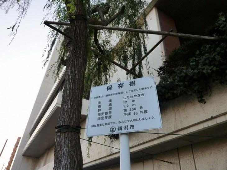 新潟市保存樹20605