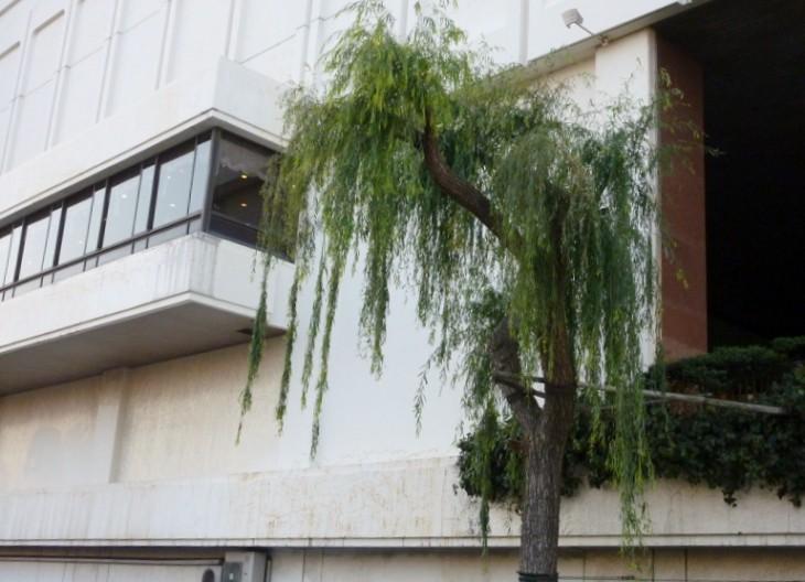 新潟市保存樹20607