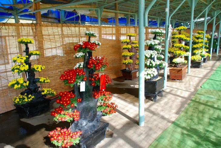 いろいろな菊が楽しめる「加茂菊花展」。(写真提供:加茂市商工観光課)