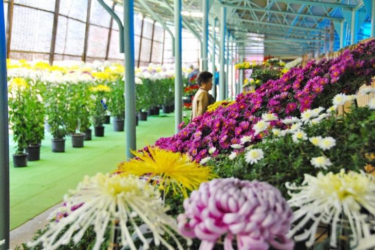 愛好家の方々が育てた自慢の菊が並びます。(写真提供:加茂市商工観光課)