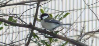 公園の冬の楽しみ マジンガーZも真っ青の、鳥と植物の生き残り合戦