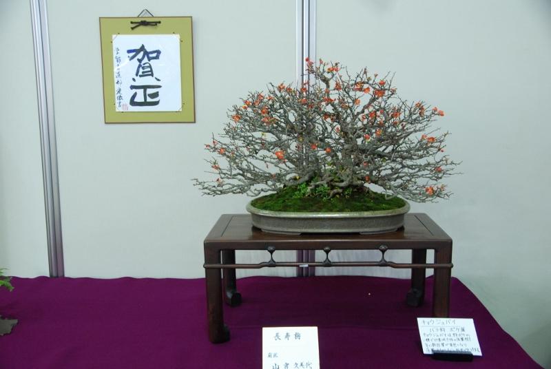 「盆栽」と東京学館の書がコラボ 新春は美しい日本の文化に触れる