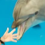 【キッズ】生き物を身近に感じる休日 マリンピアでイルカの教室がありました