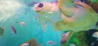 長岡市寺泊水族博物館で、冬季のお得なキャンペーンを実施(1/10~)