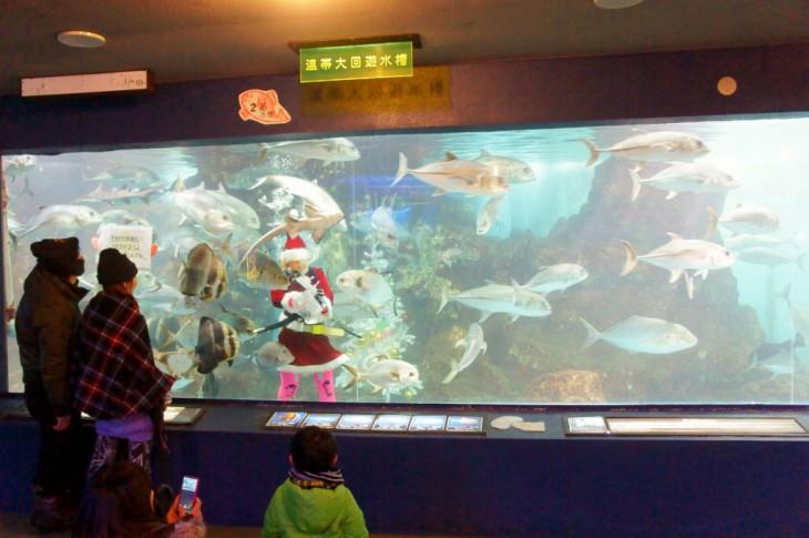 大回遊水槽では、おなじみのマリンガールによる餌付けも(写真はクリスマスイベント時)。