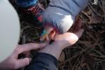 1501鳥屋野潟公園虫と植物04