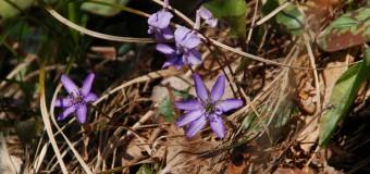 春近し、もうすぐ山野草シーズン! の前に。