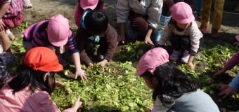 おいしい野菜は虫が来ない! 新潟市長のマニフェストにもある菌ちゃん野菜づくり