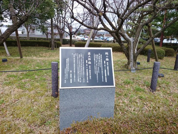 ちなみに、区役所前には「藤五郎梅」の古木が植えられています。