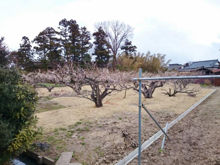 普通に歩いているだけでも、あちこちに畑が見えます。ほのかに梅の香もするような気がしました。