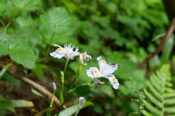 この季節は花も多く咲いているので、写真を撮りながらも登山もいいですね。