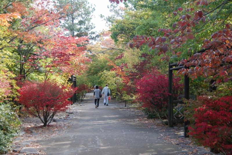 わざわざ遠出しなくても 身近な紅葉、鳥屋野潟公園