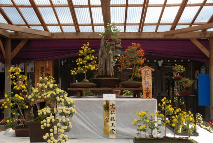 151106弥彦菊祭り_09 (800x536)