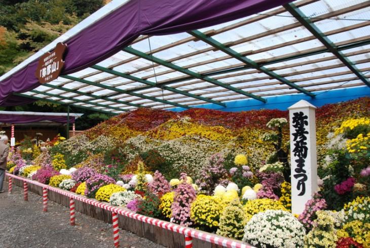 151106弥彦菊祭り_01 (800x536)