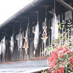 村上の伝統「塩引き鮭づくり」を体験 塩引き鮭ってこうやって作るんだ!