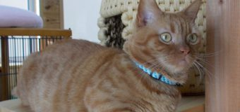 もふもふであたたかい。猫は、癒し効果抜群の「最強ペット」?