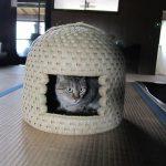 猫もすやすや眠る。その秘密は?「猫ちぐら」発祥の地で製作実演を体験リポート!